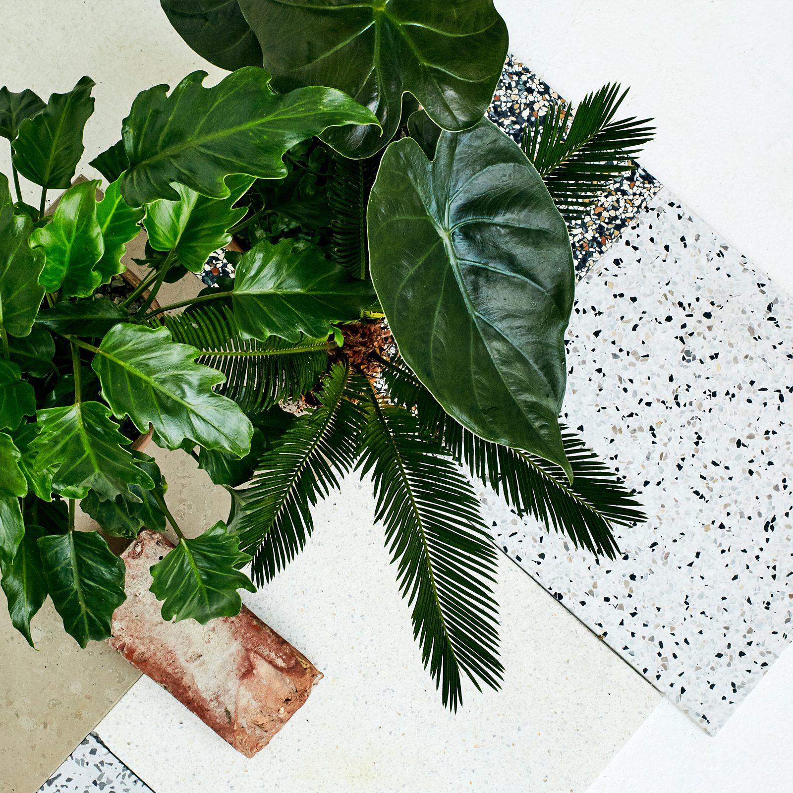 Plant København billede